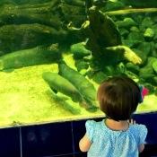 Zoológico y peces