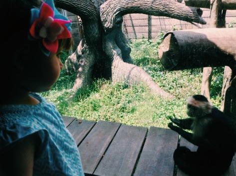 Mico en el zoo