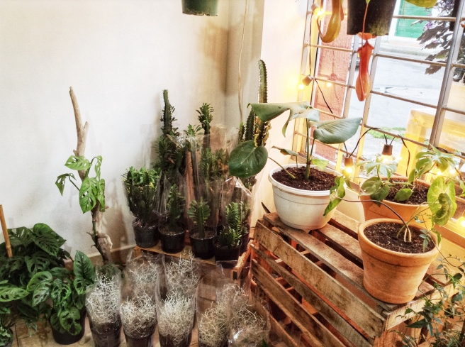 El rinconcito de plantas