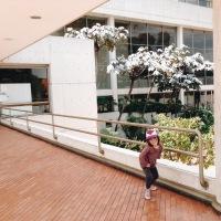 Conociendo la Biblioteca Julio Mario Santo Domingo